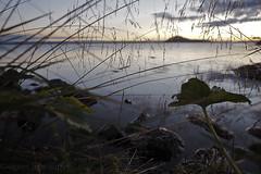 sept-1010684 (lebeaupinagnes) Tags: agneslebeaupin agnes lebeaupinagnes landscape myvatn automne mood north norduland northlife september iceland islande icelandic colours