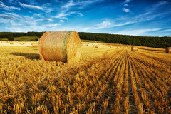 Harvest Time (mark_mullen) Tags: uk english rural landscape countryside farm farming farmland scarborough crops blueskies agriculture northyorkshire agricultural a64 stubble strawbales latesummer longshadows roundbales canon1740f4 rotoballe staxton canon5dmk3 markmullenphotography lee105mmcpl leehardedgedndgrad