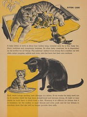 Page 10 (The Cardboard America Archives) Tags: cats vintage book lets kittens abc 1964 discover