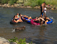 Happy Floaters (Colorado Sands) Tags: summer usa america creek river fun happy golden us colorado unitedstates smiles floating happiness summertime recreation aquatic watersports amerika tubing activities innertubes clearcreek jeffersoncounty sandraleidholdt leidholdt sandyleidholdt