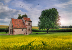 The oak (Jean-Michel Priaux) Tags: france church nature abbey field photoshop painting landscape nikon chapel alsace paysage hdr d90 dossenheim priaux mygearandme flickrstruereflection1