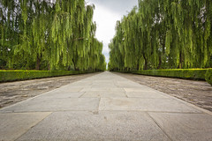 Sacred Road (Dylan Farrow) Tags: china road trees dylan lines path beijing willow website sacred leading pixelpost farrow flickrpost sacredroad notadded