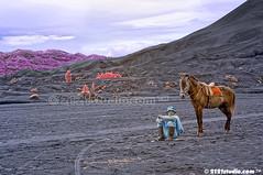 Tengger Horseman (Infrared) (2121studio) Tags: travel horse indonesia volcano java asia jawa kuda bromo mountbromo lautanpasir amazingindonesia pasirberbisik tenggerhorseman tourindonesia
