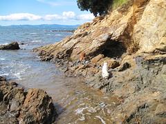Waiti Bay (russelljsmith) Tags: winter newzealand sun beach dogs sunshine coast sand poppy bella sundaydrive firthofthames 77285mm waitibay