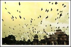 agra (neo81161) Tags: india birds nikon pigeon jaipur d90