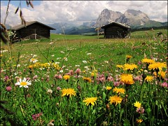 Hidden among the flowers... (mau_tweety) Tags: flowers sky italy mountains alps clouds montagne italia nuvole meadow cielo fiori alpi prato dolomites dolomiti baita alpedisiusi trentinoaltoadige