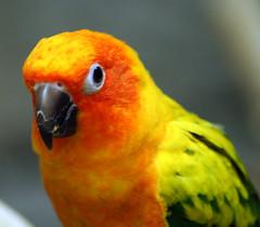 vacation bird aquarium parakeet riverhead