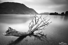 The Dead Tree - Crummock Water (Gareth Spiller) Tags: longexposure blackandwhite bw lake water canon lakedistrict cumbria 7d 1022 crummock 10stop garethspiller spillerphotography