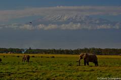 2011-03 D2a - Amboseli Park-81-1.jpg (cassio.scomparin) Tags: africa kenya safari elefante riftvalley paises oltukai qunia landscapemonumentos animaisewildlife