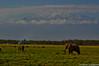 2011-03 D2a - Amboseli Park-81-1.jpg (cassio.scomparin) Tags: africa kenya safari elefante riftvalley paises oltukai quênia landscapemonumentos animaisewildlife