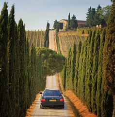 On our way to wine estate Casale Dello Sparviero (Bn) Tags: auto red summer italy sun sunlight holiday colour green leaves car drive florence oak topf50 cherries strada italia berries estate bright wine