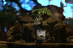 automatic -  (turntable00000) Tags: water japan photography tokyo shrine sony led automatic 365 kichijoji washroom takashi  nex  musashino  366 kitajima  chozu  turntable00000