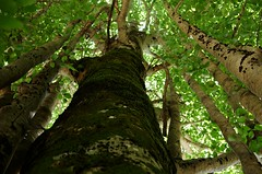 up (SS) Tags: above camera light summer vacation italy white mountain tree verde green texture colors up vertical wall backlight composition forest photography focus day mood peace shadows dof view angle pentax pov walk branches perspective scenic gimp august cielo vista handheld layers framing tones bianco depth ambience dynamism lazio k5 appennino fagus atmophere noseup