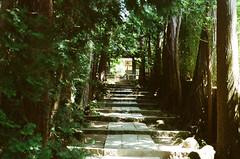 Temple of path (yyy100) Tags: shadow tree film japan temple nikon kodak path fe 5018