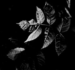 Deep in the woods (5igrid) Tags: wood autumn light shadow leaves mystery contrast forest blackwhite woods silence calmness seclusion deepinthewoods