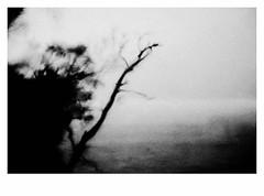 The Great Wilderness (bruXella & bruXellius) Tags: thegreatwilderness blackwhite monochrome grain grainy torridon lochtorridon glentorridon highlands northwesthighlands scotland uk