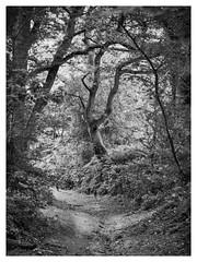 Shotover (Damian_Ward) Tags: damianward photography ©damianward shotover countrypark oxford oxfordshire oxon wood woodland trees forest oak