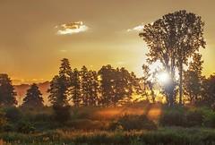 Beautiful Hungarian Nature. (lizfoto27) Tags: lzfot hungary zselic somogy reggel morning nature beautiful tyndall atmosphericoptics atmospheric mistymorning misty foggy trees landscape canon sunshine pine tree