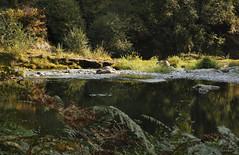 Evening on the Little No. Santiam River (Joan Gray) Tags: northfork littlenorthsantiamriver september