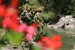 Colori sul Verdon (xiaolifra) Tags: macro color colors colori fiori gerani fiume riva river lake lago verdon gorges ruscello fioritura fiorito fiore panorama landscape