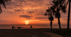 Playing with the dogs (svg74) Tags: sun beach playa silhouette contraluz light palmeras palmtree costadelsol mlaga andaluca mar mediterraneansea dog paisaje landscape naturaleza nature