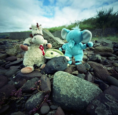 Late for Tea (wheehamx) Tags: pinhole soft toy adventure late for tea