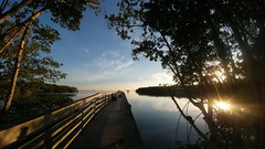 Walk with me... (Shelby's Trail) Tags: fences boardwalk fourmilecoveecopark capecoral fl fencedfriday mangroves caloosahatcheeriver hff