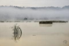 Zen for today (PeterGrayPhoto) Tags: water calm sunrise fog mist waterscape landscape warmia polska poland still silence mood