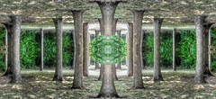 In to the world (rhonda_lansky) Tags: trees design nature outdoors green tree plants places intotheworld creations formations abstract abstracttrees abstractoutdoors outdoor mirroredshapes mirroredabstract mirrorart symmetryart symmetrical symmetricalart symmetryartist symmetricalartist abstractart earth expressive lansky visual abstractplant foliage rhondalansky surreal pattern organicpattern texture art poems shortstories storys writing abstracttree surrealplaces otherworlds scifi fantasy dreams dreamy