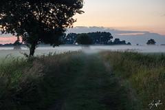GST01653 (Gordon Stver) Tags: dirt track lane fog tree landscape