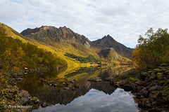 Golden autumn in the arctic (Petra's nature photography) Tags: nordland norge autumn arctic