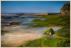 Wombarra Beach (Jo Langtry) Tags: 2016 focus moss nsw rocksshelves september2016 sigma35f14 sonya7r spring wombarra beach coast ocean sunrise