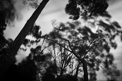 Forceful Skewed (BlakeinatorMate) Tags: trees bw 6 seascape storm abstract monochrome landscape photography wind head 10 hard woody stop lee nsw nd blake grad swell hitech iluka formatt bodycote