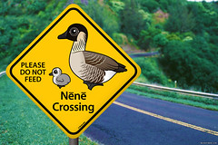 Nene goose funny (birdorable) Tags: cute bird sign hawaii crossing streetsign duckling conservation goose chick nene hawaiiangoose birdorable