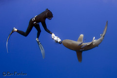 Shark dance (bodiver) Tags: hawaii shark ambientlight wideangle freediving fins
