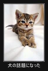 犬の話題になった #猫 #犬 #話題 (Demochi.Net) Tags: life cute sexy japan fun japanese motivator culture 日本 ペット 猫 demotivator 金 家族 結婚 ゲイ 女 子供 おっぱい 愛犬 政治 社会 巨乳 文化 眼鏡 教育 demotivators 経済 女性 初恋 r18 女子 カップル 子猫 女装 お笑い motivators 会社 少子化 企業 ユーモア 恋 悪い 格差 風刺 一言 デモチ 大喜利
