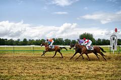 Course à Gramat (dprezat) Tags: hippisme course cheval departementdulot sudouest gramat lot 46 midipyrenees france sport tiercé pmu sonyalpha700 tumulus