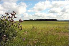 Lacombe Farmlands (greenthumb_38) Tags: canada clouds farm farmland alberta wildflowers plains wildflower lacombe farmlands canon40d canaianrockies jeffreybass candaandnorthdakotaadventureof2012