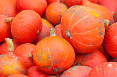 Closeup of just harvested orange pumpkins (RuudMorijn) Tags: thanksgiving november autumn red summer food orange color fall halloween nature netherlands field yellow closeup season pumpkin healthy stem october colorful raw natural many background country pumpkins farming seasonal group decoration harvest grow vegetable fresh soil dirt gourd pile crop squash produce organic agriculture edible decorate rood heap brabant oranje ripe zand kleurrijk noordbrabant rode grond harvested aarde structuur textuur pompoenen vuil pompoen brabantse vuile