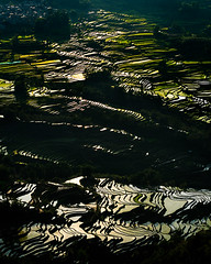 Reflections (William Yu Photography / Photo Workshops) Tags: china shadow reflection contrast dark landscape mirror stair rice terrace agriculture patty highlight yuanyang