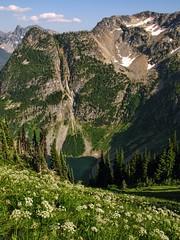 IMG_7367 (d_silva1) Tags: cascades glaciers pacificnorthwest mountbaker northerncascades alpinewildflowers mountbakernationalpark