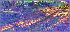 Light on the Forest Floor. Explore Sep 9, 2012 #455 (Tim Noonan) Tags: blue light orange painterly colour green texture leaves yellow digital forest photoshop evening shadows floor pastel violet vivid explore mosca impressionistic hypothetical vividimagination artdigital greenscene shockofthenew sotn stickybeak sharingart maxfudge awardtree maxfudgeawardandexcellencegroup exoticimage digitalartscene netartii donnasmagicalpix