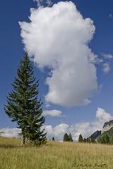 PRATOPIAZZA (michele busetto) Tags: blue summer italy alberi italia nuvole estate albero prato 2012 altoadige pratopiazza