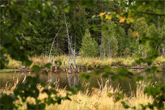 (Kirill & K) Tags: autumn lake nature forest cloudy      southural  zhurboloto