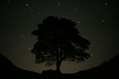 Sycamore Gap (At Night) (wazimu0) Tags: road shadow sky tree night canon stars 50mm scary roman f14 gap sycamore lone once twice astral 1ds plough hadrians haltwhistle brewed constilation