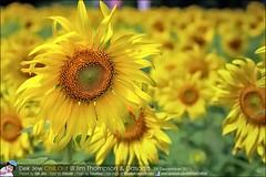1Day-trip-Jim-Thompson-Farm&Dasada-Gallery_E12663461-024