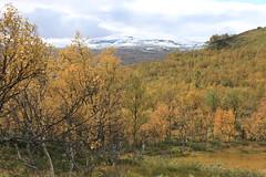 Spänning i svampskogen (auzgos) Tags: skog höst spanning fjäll härjedalen fotosondag fs120923