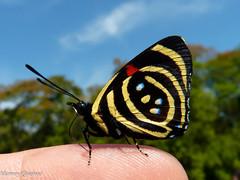 Borboleta (Marney Queiroz) Tags: color nature cores do natureza foz iguacu colorido queiroz marney frenteafrente panasonicfz35 marneyqueiroz