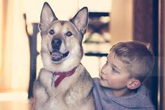(Rebecca812) Tags: boy portrait dog love childhood animal togetherness kid mix husky child friendship son chow germanshepherd companion familypet canon5dmarkii rebecca812