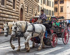 Horse Drawn Carriage, Florence (Ray in Manila) Tags: florence italy europe tuscany touristattraction horse carriage whitehorse eos650 sightseeing historical